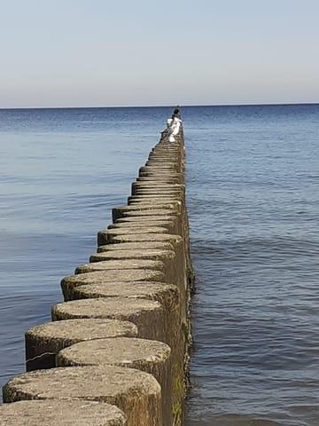 Strandbuhne Ostsee