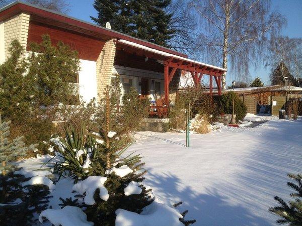 Birkenhain im Winter