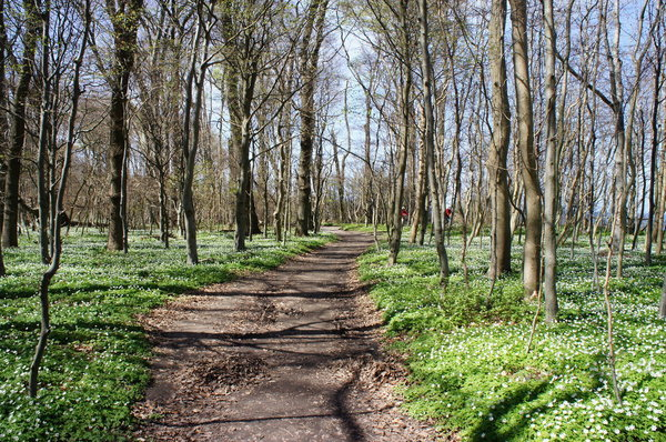 Ostsee-Radweg durch den Gespensterwald