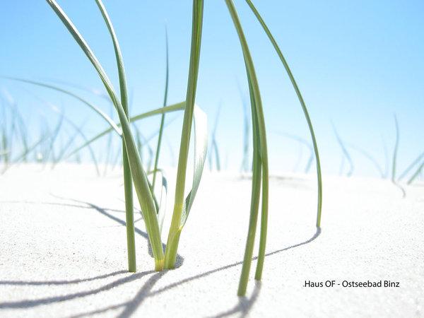 feinster Sandstrand in Binz