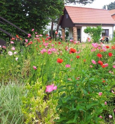 Blick durch den Garten