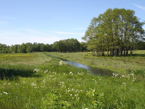 Wiese am Achterwasser bei Zempin