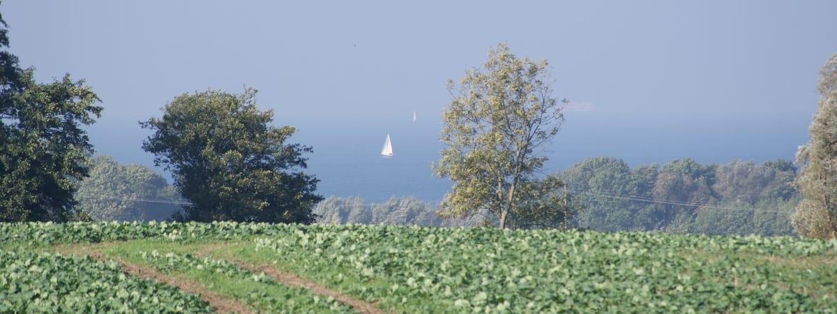 Ostseeblick über die Felder