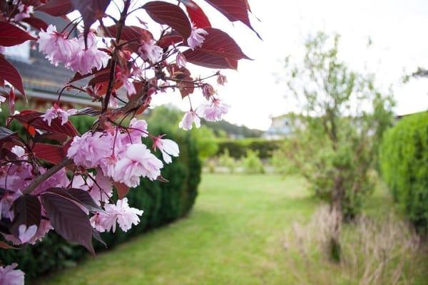 Impression Garten