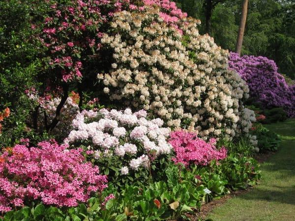 Rhododendronpark Graal-Müritz