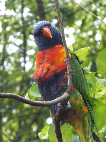 Ausflugsziel Vogelpark Marlow