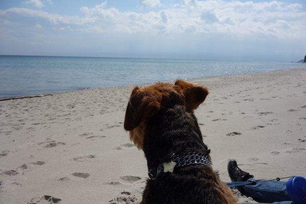 Am Südstrand sind auch in der Saison stundenlange Strandspaziergänge mit Hund möglich