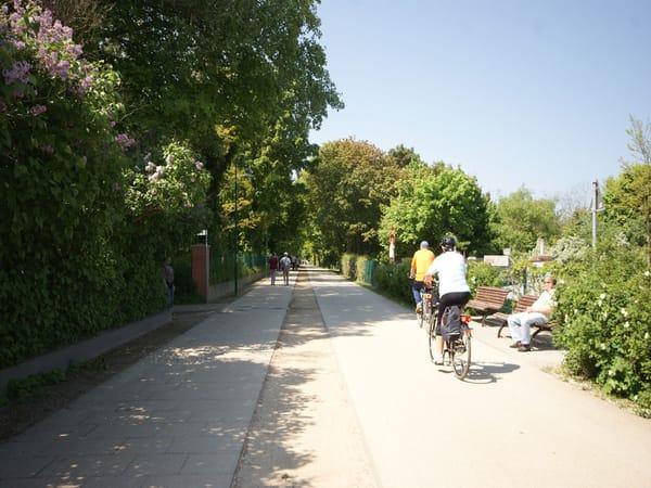36km langer Fahrradweg entlang der Usedomer Küste