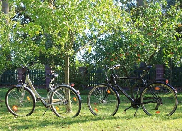 hauseigene Miet-Fahrräder