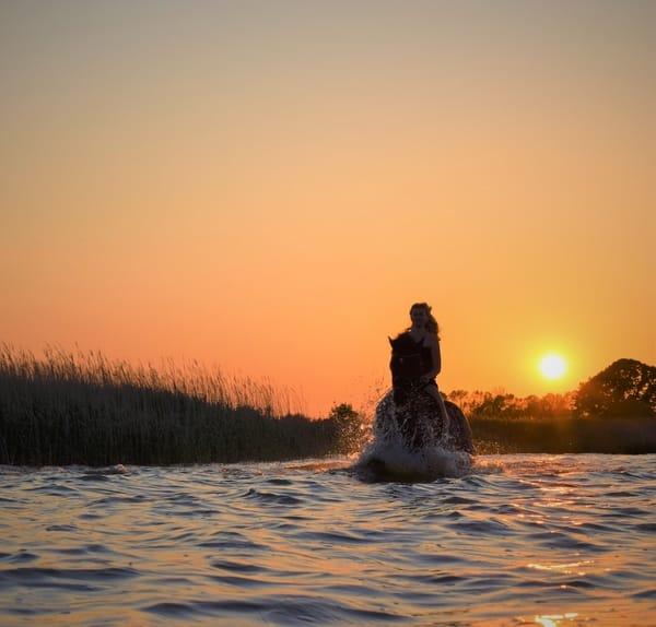 Sie können bei uns auch die Zeit mit den Pferden genießen, ob ein Blick auf die Weide oder im Sattel. Gern können Sie nach Absprache auch das eigene Pferd mitbringen.