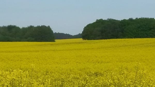 """Die """"gelbe Insel"""" im Frühjahr"""