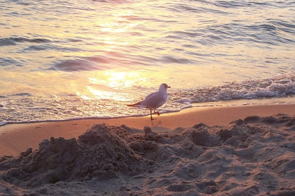 die ersten Gäste am Strand am Morgen