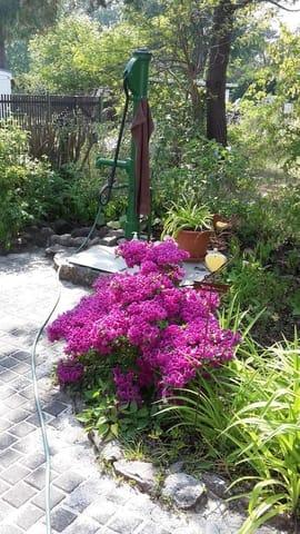 Garten unten mit Pumpe