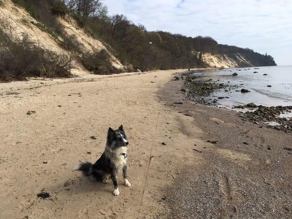 Urlaub mit Hund ist bei uns ebenfalls willkommen