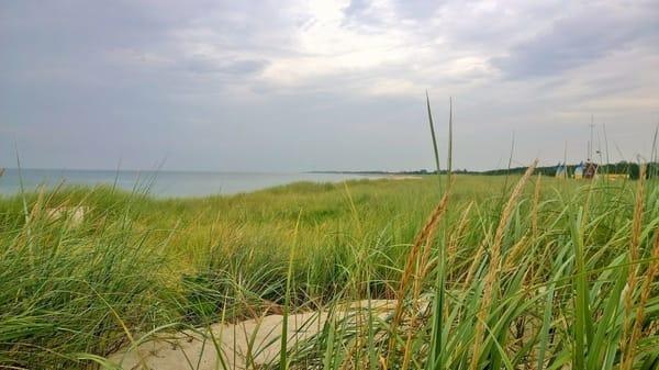 Dünenlandschaft am Dierhagener Strand
