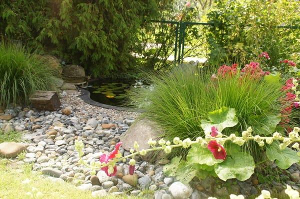 Teich vor der Wohnung Kormoran