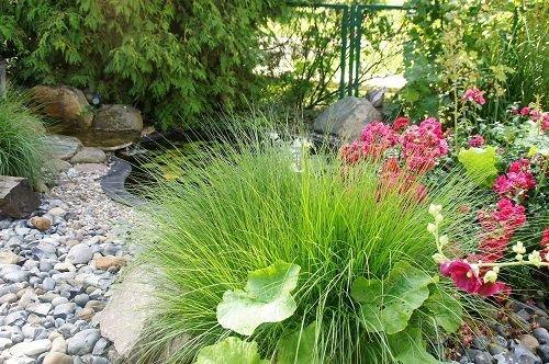 Teich im Gartenbereich von der Wohnung Kormoran