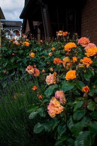 Rosenpracht vor dem Eingang