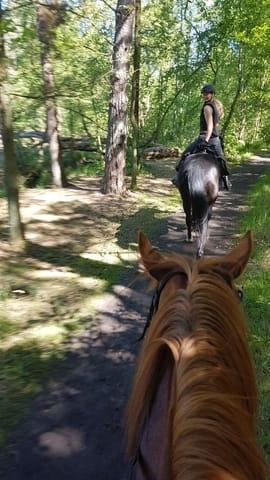 Unsere Landschaft mit dem Pferd erkunden, für routinierte Reiter Ausritte nach Absprache möglich
