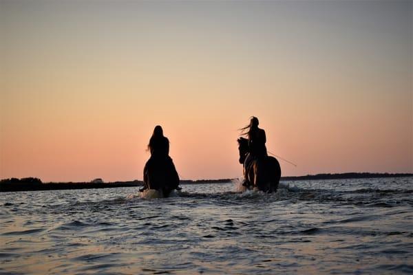 Unsere Landschaft mit dem Pferd erkunden, für routinierte Reiter Ausritte nach Absprache möglich sowie Reitunterricht.