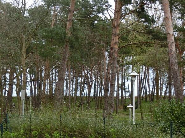 Blick vom Garten Richtung  Ostsee