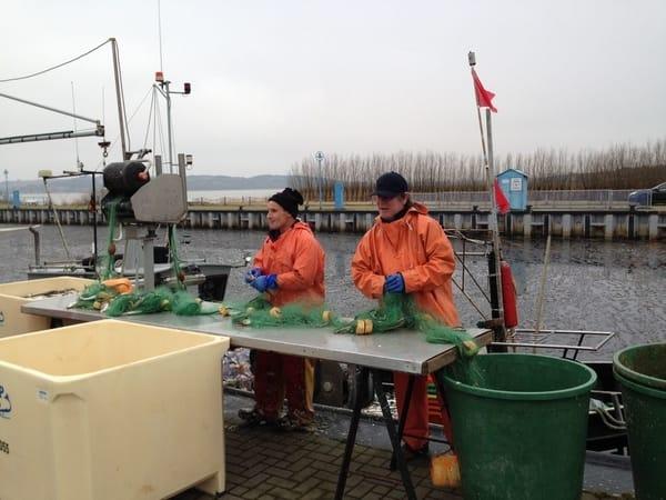 Fischer am Thiessower Hafen beim ˋHering Puckenˋ