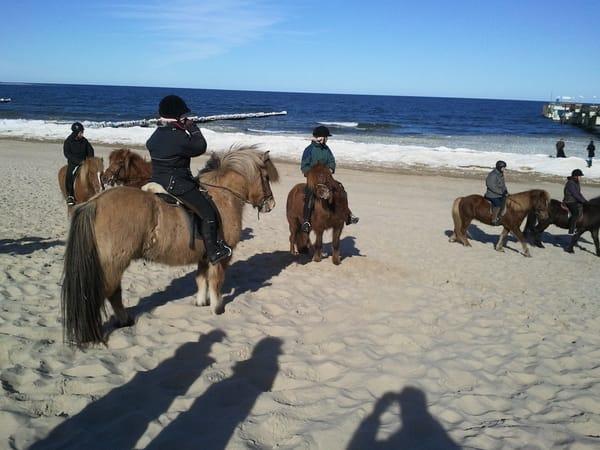 Ponyreiten am Strand (nur im Winterhalbjahr)