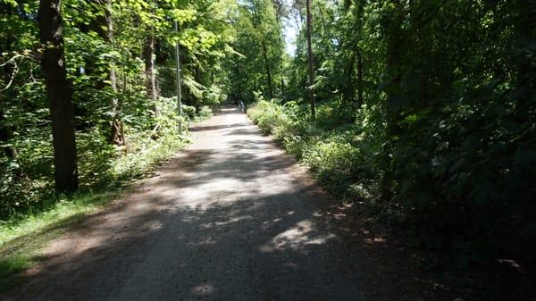 Fahrradweg durch den Küstenwald