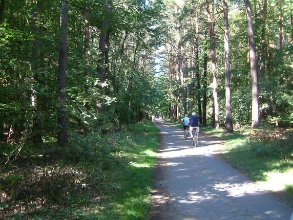 Radweg im Küstenwald