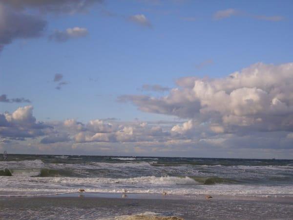 Strandläufer, die Möwen auf Futtersuche bei aufgewühlter See