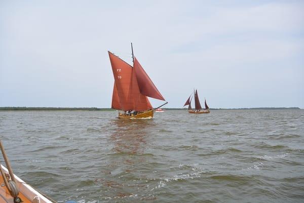 Zeesbootregatta - Braune Segel mit Tradition