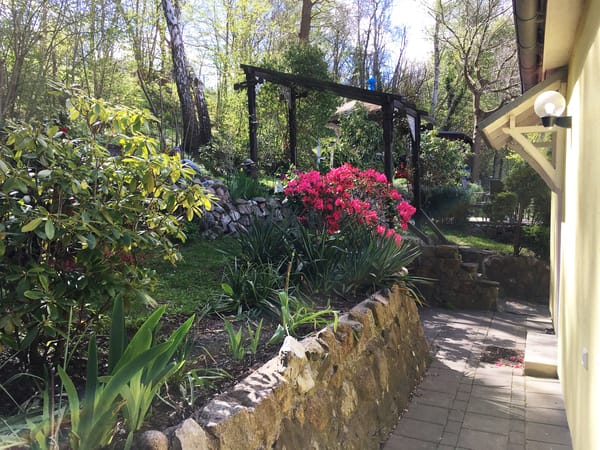 Blick in den Garten hinter dem Haus.