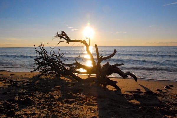 Wurzel am Strand