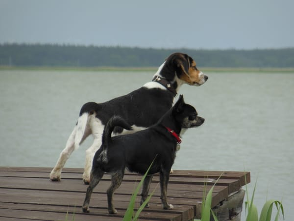 Pirat Zorro mit Gästehund auf Wachposten