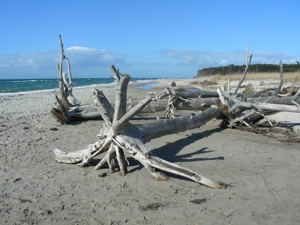 Ostseestrand nach Sturm