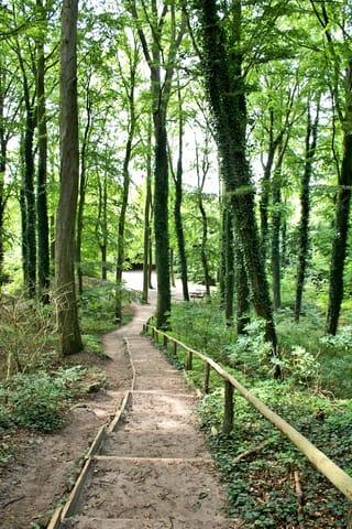 Wald am Streckelsberg