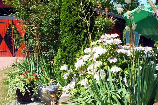 Gartenimpressionen rund um das Klönhus