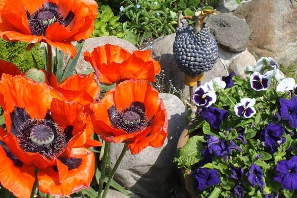 Gartenimpressionen mit Perlhuhn