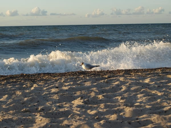 Der Strand direkt vor der Haustür, nur 50 m über die Straße