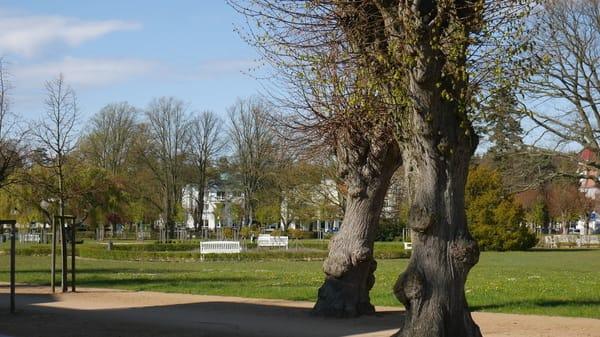 Der Lindenpark, direkt vom Balkon aus zu sehen