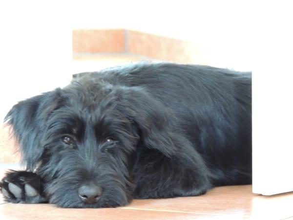Ihr Hund ist auch willkommen, den müssen Sie aber mitbringen, dieser gehört uns.