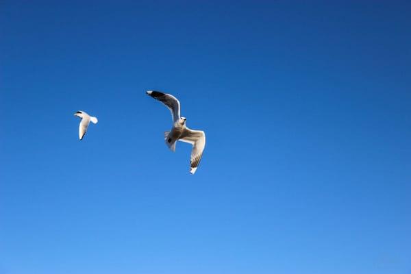Ich flieg nach Usedom
