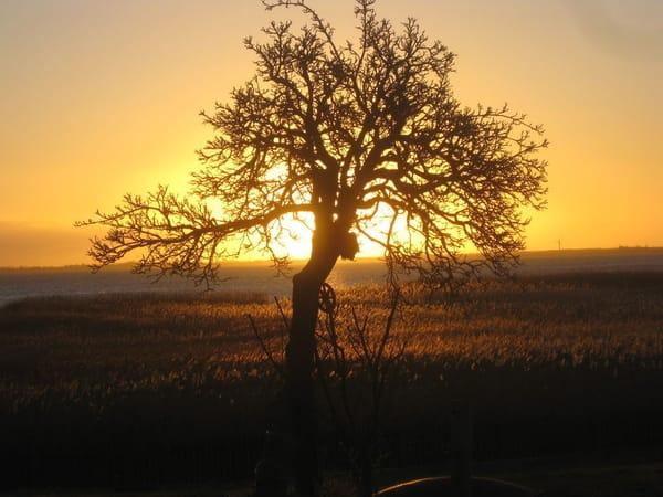 Sonnenaufgang,was will das Herz mehr...........