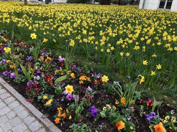 Frühling an der Ostseeallee