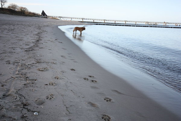 Breiter Sandstrand. Hunde gern gesehen.
