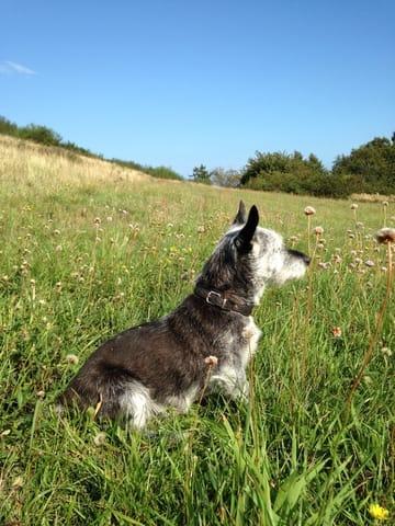 Kleiner Hund in Ap. 1 od. 2 sehr willkommen