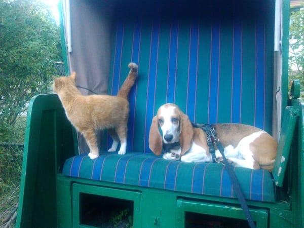 Haustiere willkommen !(nach Absprache)