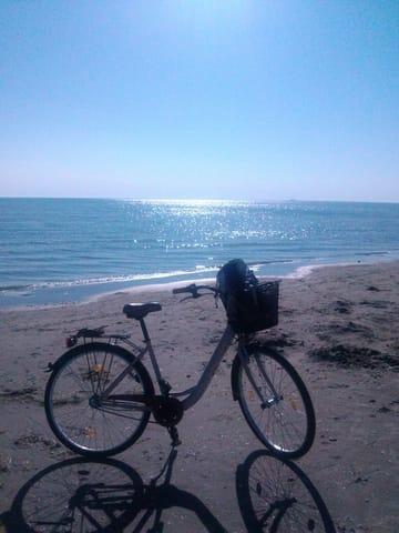 Fahrradverleih in unmittelbarer Nähe