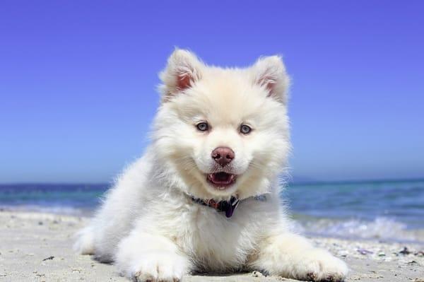 Urlaub mit Hund - ab sofort bei uns möglich mit kleinem Aufpreis - Sprechen Sie uns an !!