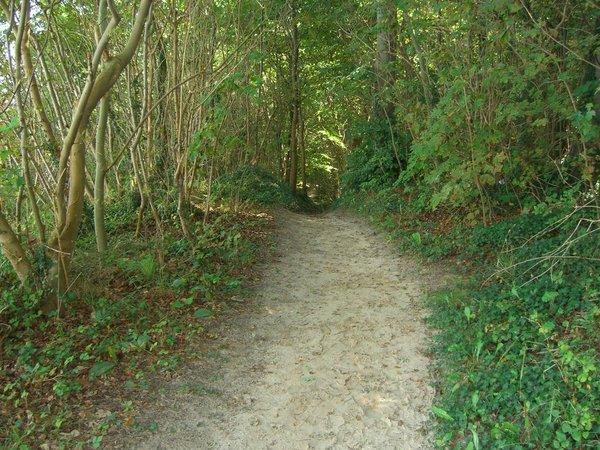 Waldwege Hochufer